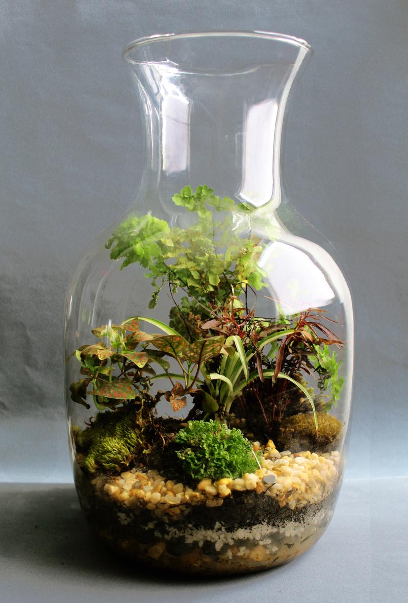 So greeen coolhuntermx - Plantas para terrarios ...